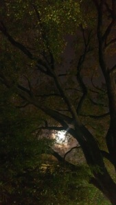 Moon-through-elm-tree-boughs-LafayettePark-WashingtonDC-29Sept2012
